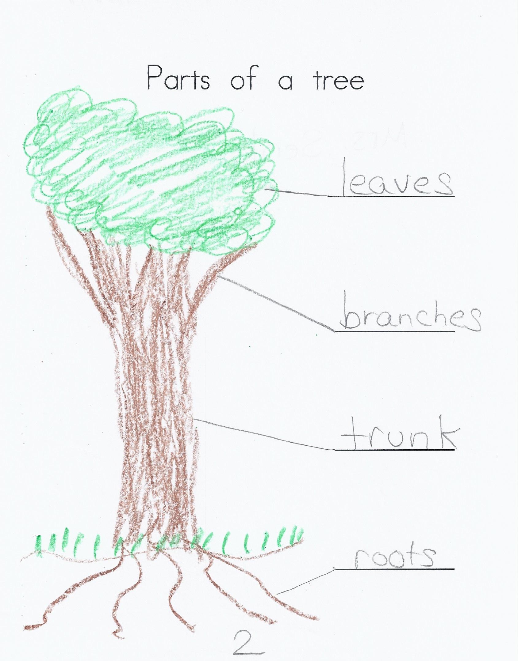trees kindergarten nana