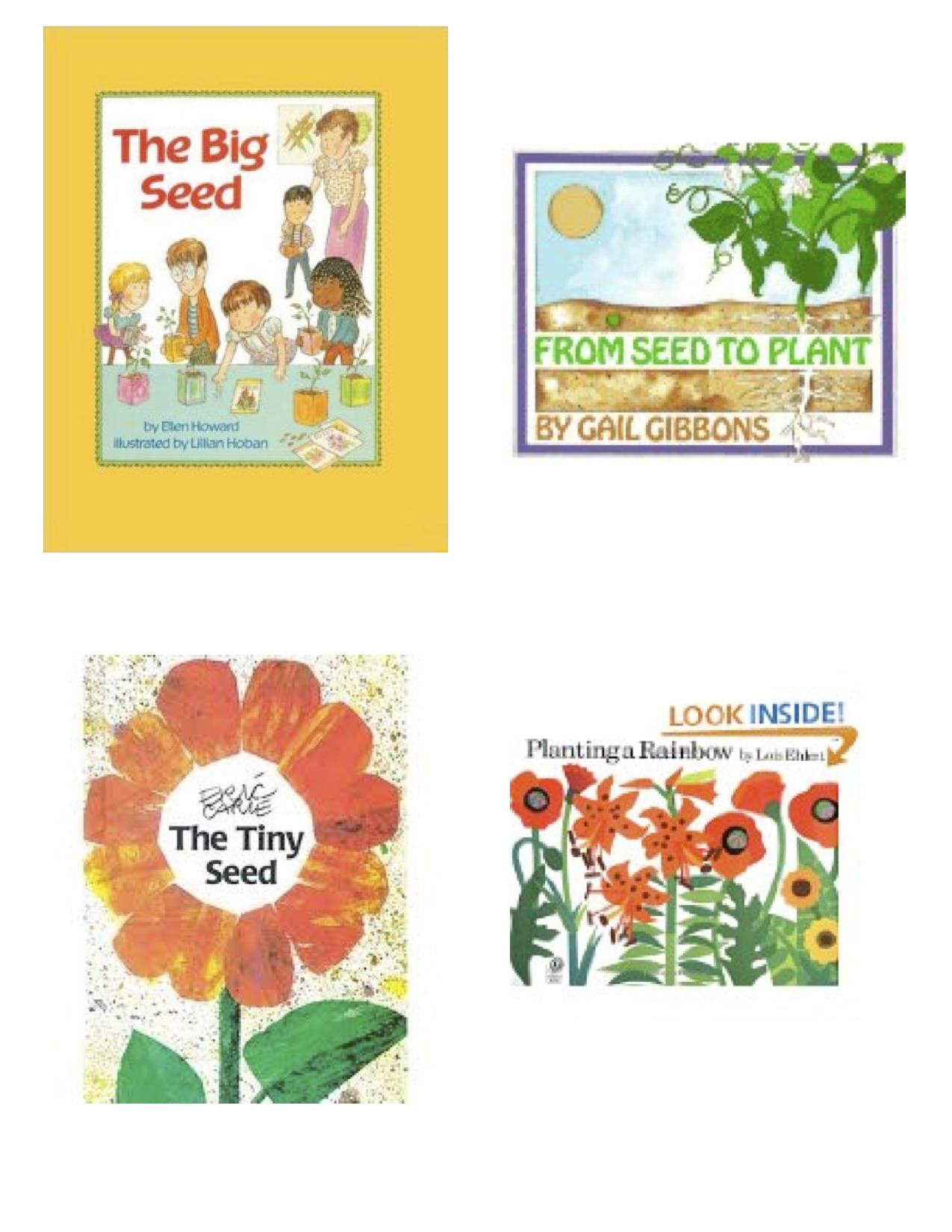 Seeds And Flowers Kindergarten Nana